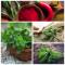 Целебные травы и специи против осенней хандры для каждого дома