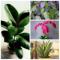 8 домашних растений, которые гарантированно помогут быстро уснуть