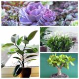Зеленые экстремалы: 10 растений, которые выдержат испытание засухой и холодом