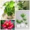 12 домашних растений, которым полезна темнота