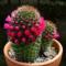 10 комнатных растений в роли источников позитива в доме